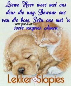 Good Night Sleep Tight, Sleep Quotes, Goeie Nag, Good Night Quotes, Afrikaans, Teddy Bear, Van, Animals, Sweet Dreams