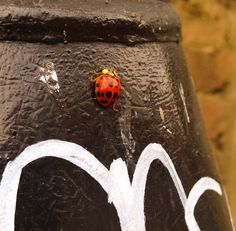 And ladybirds in the #harringay passage