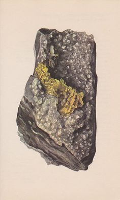 Vintage Print Rocks and Minerals, Gold