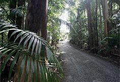 Tamborine Mountain - Queensland, Australia.