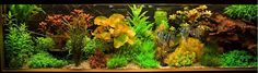 Aquariumvereniging Vrij en Blij