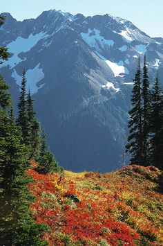 Mt Skokomish, Olympic National Forest, Washington; photo by Crest Pictures