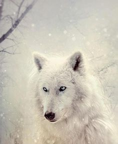 this looks like the wolf that I always visits me in my dreams...