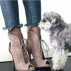 grafika fashion, dog, and shoes