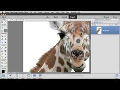 Photoshop Elements 14 Refine Selection Brush Tool