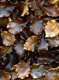 #Autumn #brown #leaves.