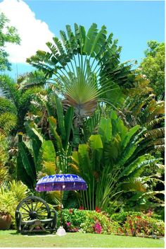 Tropical Garden Tropical Garden Tropical Garden Source by . Tropical Garden Tropical Garden Tropical Garden Source by . - Tropical Garden Tropical Garden Tropical Garden Source by … –