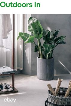 Embrace your inner green fingers, by adding plants to your living space. Whether hanging, planted in a terracotta pots or perfectly placed in glass terrariums, indoor plants breathe new life into both modern and traditional homes. Discover the range of home accessories on eBay today.