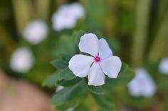 Flor em Saquerema - Projeto Eu Revivo a História - crédito: www.casa3studio.com.br