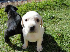 little pupys