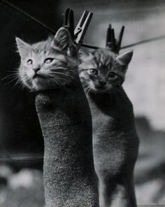 oh, the indignities we suffer for our two-legged's entertainment...(kitty sigh) ♥