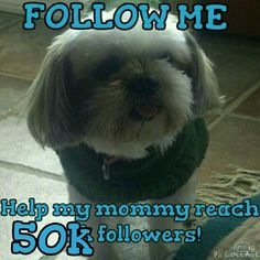 Follow Game Hey PFFs I figured I should join the follow game bandwagon:) 1.) Like this post 2.) Follow me and I'll follow back 3.) Share this post and possibly tag a few others too:) 4.) Follow everyone who liked this post! Let's continue to grow our special community and share the love! Coach Other