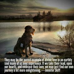Love the pin, dogs are wonderful and we can learn so much from them.