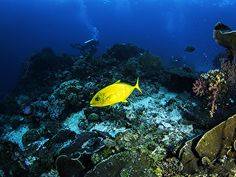 Papéis de parede Mundo subaquático Corais Peixes Animalia
