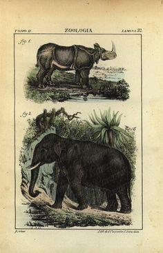 Original Antique Hand Colored Animal engraving  by RarePostCards