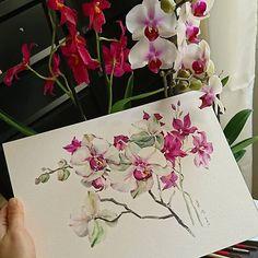 Watercolorist: @weitaillandier    #waterblog #акварель #aquarelle #painting #drawing #art #artist #artwork #painting #illustration #watercolor #aquarela