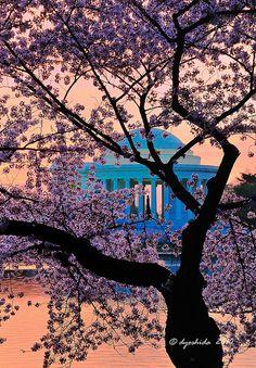 Jefferson Memorial, Washington, D.C.; photo by Dyoshida