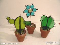 .Stained Glass Plant, Cactus!