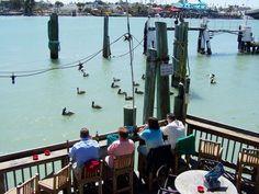 Pelican-watching from Hub's deck