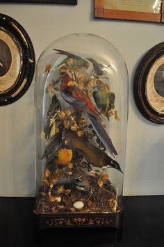 Taxidermy Birds. I prefer my birds alive and in the wild, but this is kinda cool.