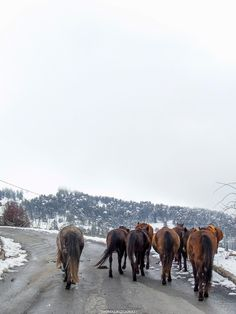 Found those free horses while exploring Samarina, a traditional mountainous village in the Grevena area of Greece, built at an altitude of Free Horses, Samar, More Photos, Exploring, Greece, Mountain, Creatures, Traditional, City