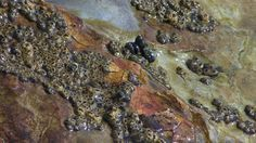 Stock footage - http://www.alunablue.com - Royalty free stock video for broadcast, video projection and all multimedia productions.   Hyper Nature 0107: Ocean waves wash over rocks in a tide pool (Loop).   A Luna Blue Stock Video.  Imagery for Your Imagination.