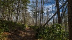 Peaceful. If I were to think of a single word to describe the Pink Beds Loop Trail, that would be it. Peaceful. Located in a high valley in the Cradle of Forestry, Pink Beds is surrounded by the tal…