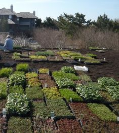 Pallets of plants for a green roof Southhampton Alive Structures ; Gardenista
