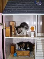 Image result for cats in dollshouse