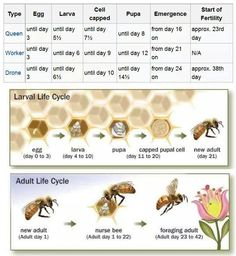 Charts about honey bees