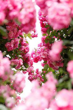 rose garden | Flickr - Photo Sharing!