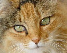 FreebieCat's Cat of The Day September 13, 2015 http://www.freebiecat.com/cat-of-the-day.php