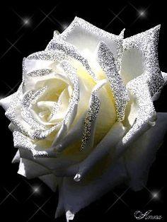 images of animated white roses - photo #13
