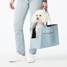 fable-pets-dog-carrier-0620 Dog Carrier Bag, Dog Bag, Dog Travel, Leather Collar, Pet Accessories, Best Dogs, Miki Dog, Trends, Pet Products