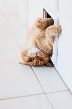Well know that I am ALMOST through the door....I think I will take a nap