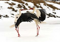 Storks by Kyslynskyy Eduard on 500px