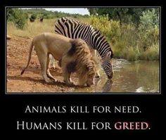 Animals kill for need Humans kill for greed