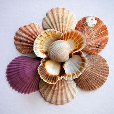 Seashell Flower Design Photograph