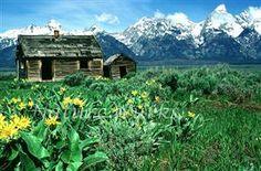 My Favorite Images / Log Cabin with Great Teton Mountain Range