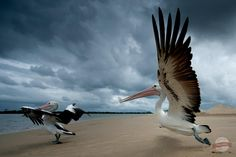 Take Off by Mark Rayner on 500px