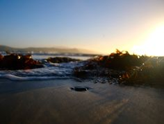 Tide coming in. Plimmerton, New Zealand Great View, New Zealand, Sunset, Country, Water, Photos, Outdoor, Gripe Water, Outdoors