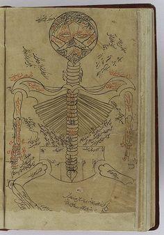 File:Skeleton system., Avicenna, Canon of Medicine Wellcome L0040291.jpg