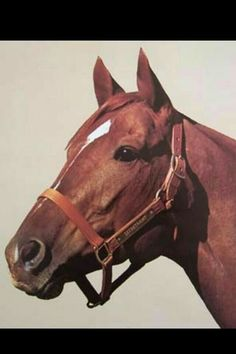 The beauty that was Secretariat.