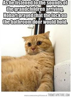 Poor traumatized cat! LOL