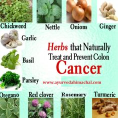 Herbs That Naturally Treat and Prevent Colon Cancer