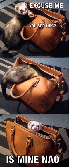 Always look in your bags before heading out                                                                                                                                                      More