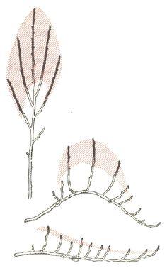 Snoeien fruitbomen, algemene snoeirichtlijnen