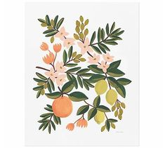 Citrus by Rifle Paper Co. #potterybarn