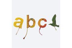 大人も、落ち葉で遊びましょ。 グラフィック・デザイナーのTwan van Keulenは、落ち葉に触発されて「a」「b」などの文字や鳥を形にしました。落ち葉を使えば、シンプルなアルファベットも個性的なアートに早変わりです。 必要なものは、落ち葉とはさみのみ。何に使うかなんて野暮なことは考えず、思いのまま切ったり、くり抜...