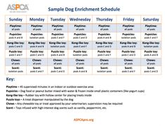 Dog Enrichment Schedule | ASPCApro